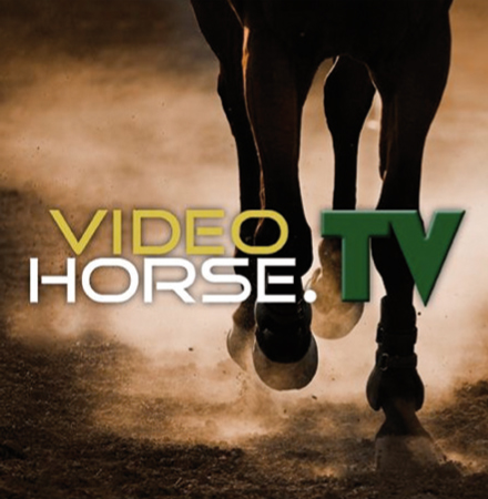 VideoHorseTV